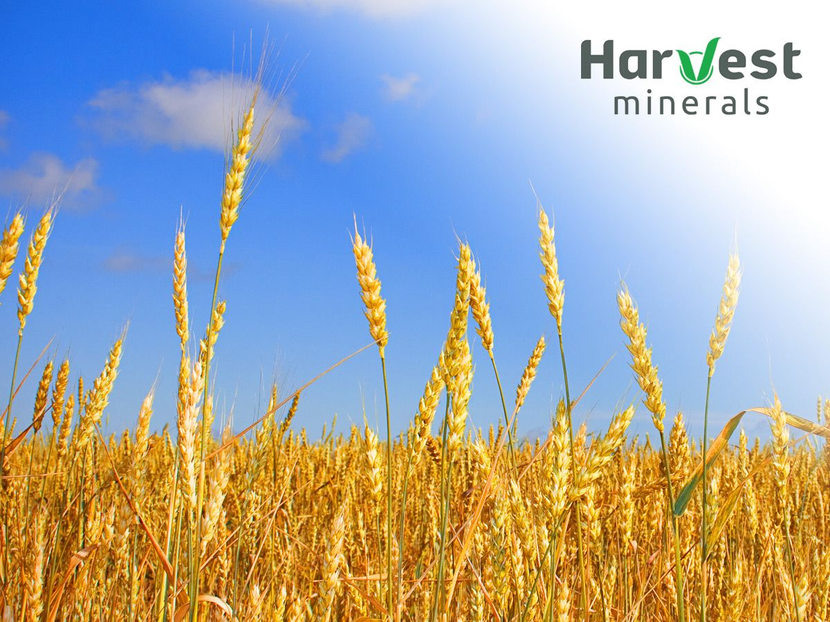 Harvest Minerals bags distribution deal with major Brazilian fertiliser plater (HMI)