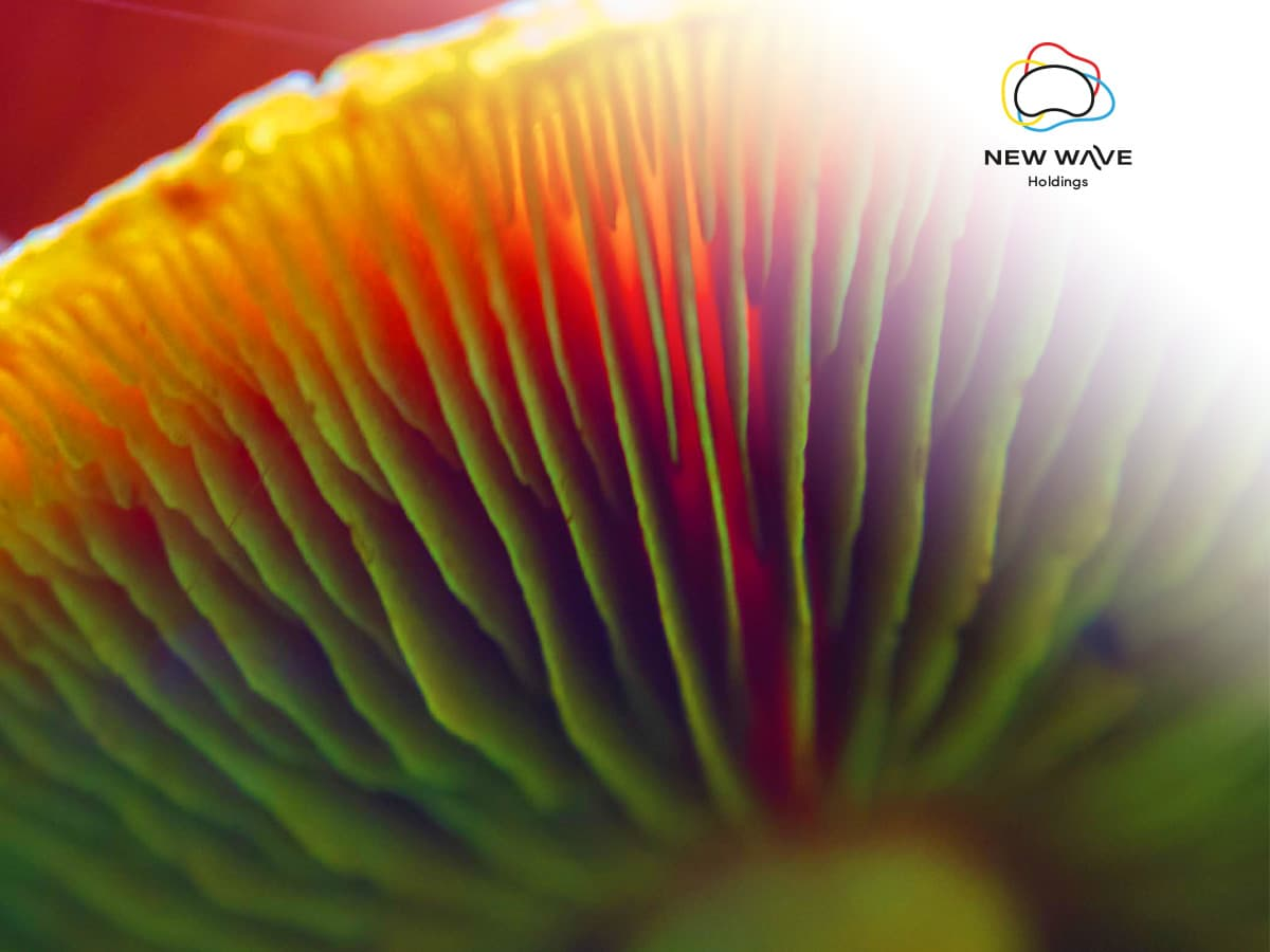 New Wave Holdings Corp- Launching the first publicly-traded Psilocybin-growing operation (CSE: SPOR│FWB: 0XM2│OTC:TRMND)