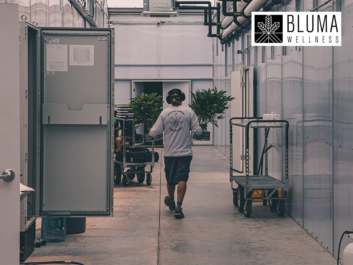 Bluma Wellness Inc – A Strategic Business Success Model For 2020 And Beyond (CSE:BWEL.U   OTC:BMWLF)