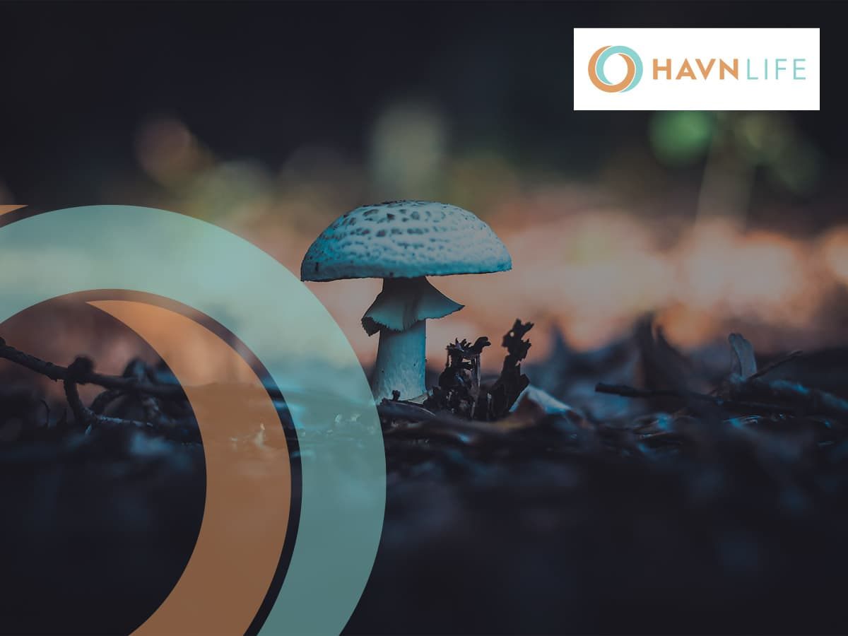 From Fungus To Patient: Building A Psychedelic Supply Chain From The Ground Up.