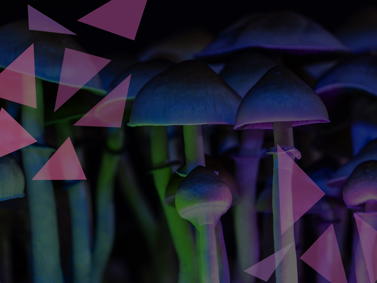 With preclinical trials already underway, psychedelic medicine firm Lobe Sciences is on the path to success