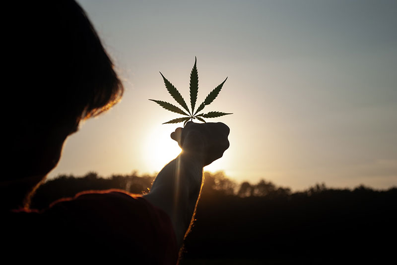 Cannabis Capital! London is poised for cannabis stock explosion
