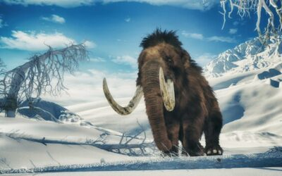 Colossal to genetically re-create Woolly Mammoths to combat climate change