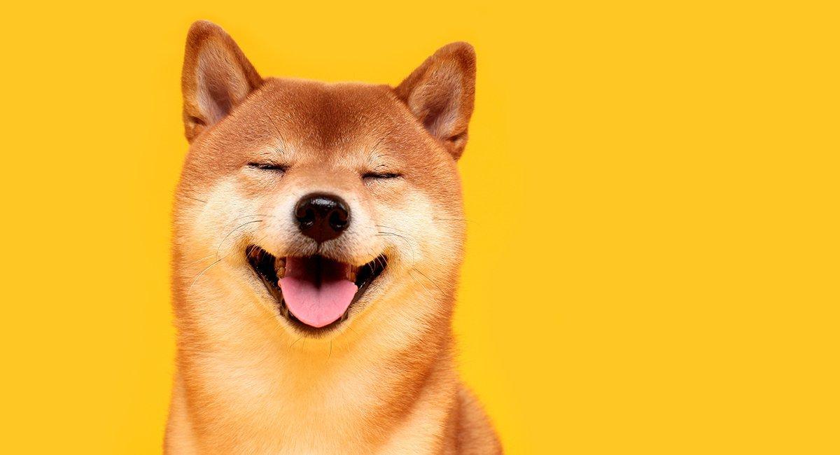 Shiba Inu coin up by 51.4% as Robinhood rumours swirl